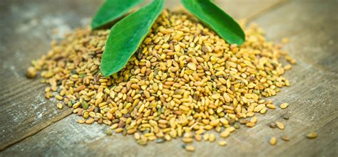 fenugreek uses picture 11