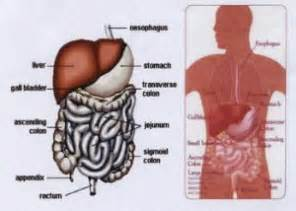 liver pain picture 1