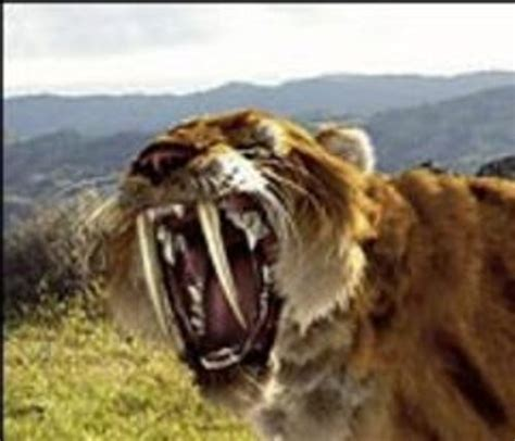 saber tooth tiger picture 10