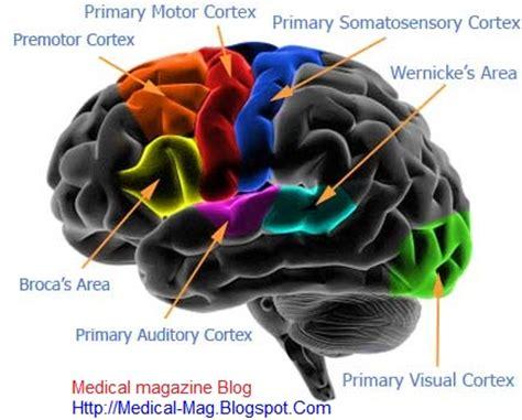 cognitive le cerbvas disease picture 3