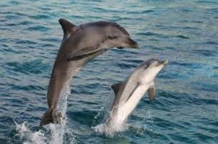 dolphins sleeping habits picture 6