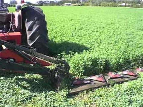 alfalfa picture 1