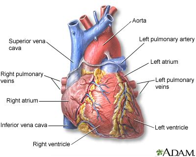 Causes of sudden drop in blood pressure picture 11