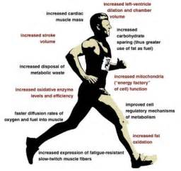 definition of muscle endurance picture 17