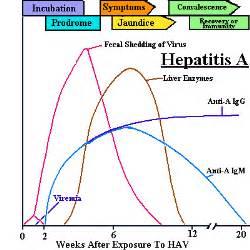 symptoms of liver enlargement picture 3