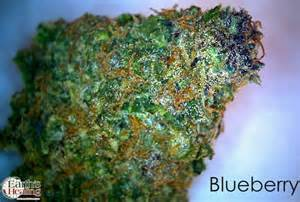 herbal smoke review picture 6