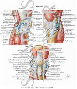 pictures of the knee joint with labels picture 6