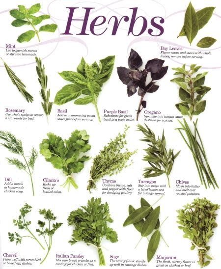 use diet with herbs and smart / fat picture 3
