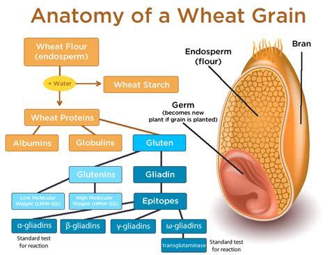 alfalfa gr for gluten allergy picture 10