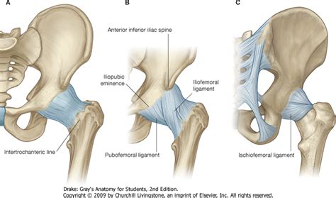 hip pain joint picture 3