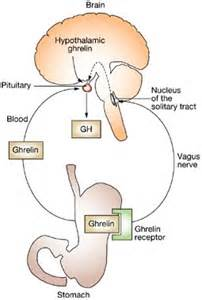 hgh lower stomach pain picture 10