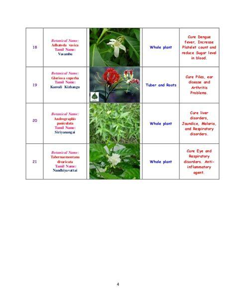 tabernaemonata divaricata for arthritis picture 14