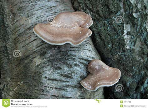wart mushroom growing on penis picture 15