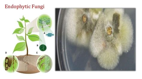 boils infections picture 7