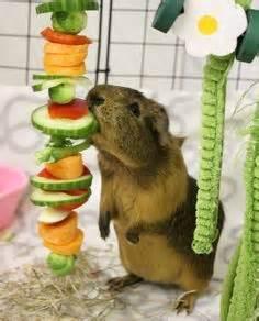 cavy diet picture 18