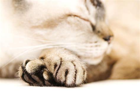feline pain relief treatments picture 10