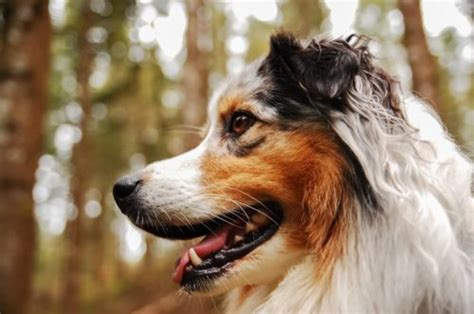 signs of liver problems in dogs picture 14