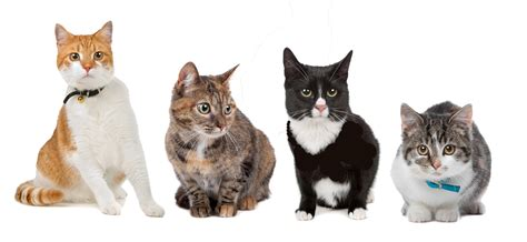 cats health picture 1