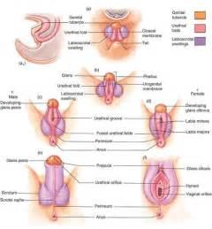 men comparing genitals picture 1