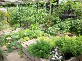 herbal garden picture 7