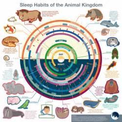 sleep habit picture 15