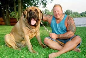 picture of mastiff big penis picture 5