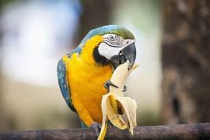 parrot balanced diet fruit picture 3