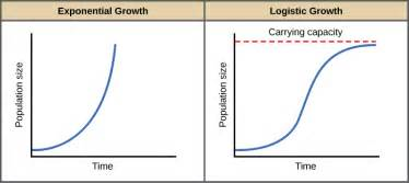 max growth expansion picture 7