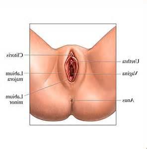 pics of vigina picture 2