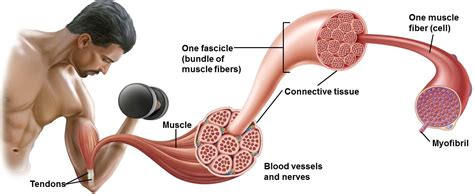 how to measure muscle growth picture 2