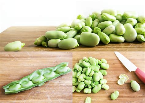 fava bean capsule for hives picture 6