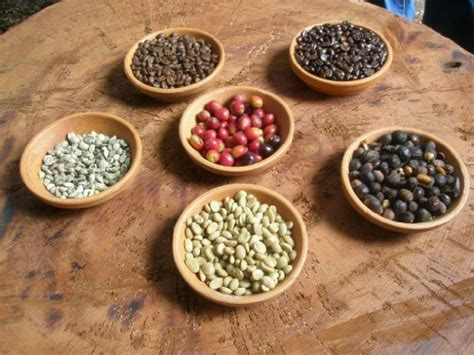 50 lbs green coffee beans picture 17