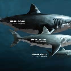 pictures of prehistoric shark h picture 10