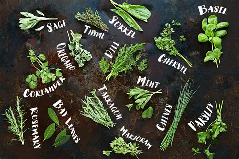 foods and herbs similar effects to marijuana picture 11