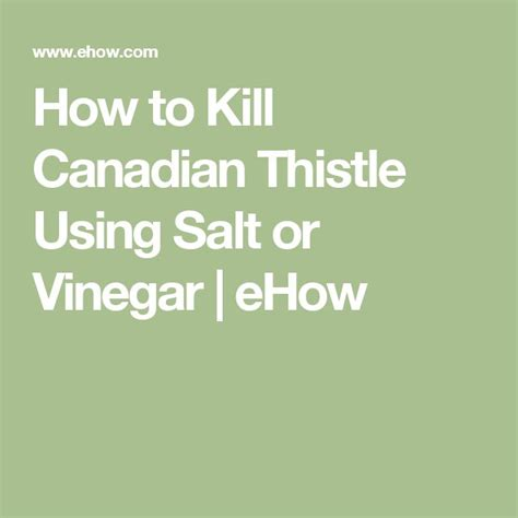 how to kill canadian thistle picture 3