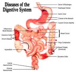liver failure toxins brain picture 18