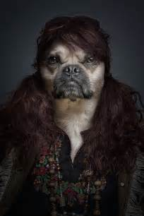 human canine h picture 1