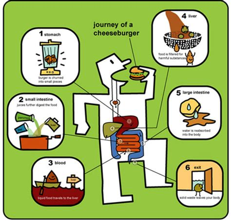 a kids understanding to digestion picture 11