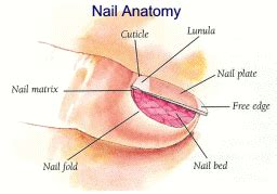 what causes nail fungus picture 10