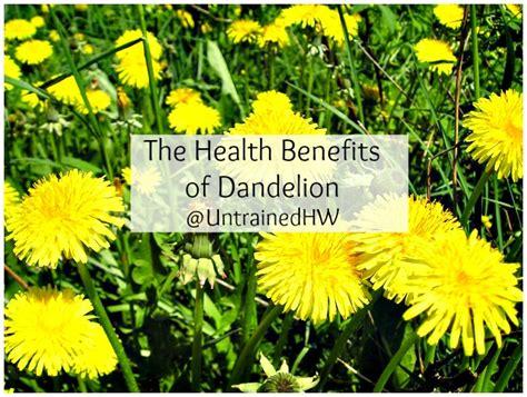 dandelion for health picture 6