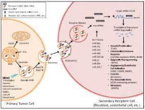 colon tumor picture 11