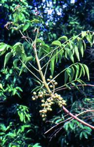 vitex and herpes picture 14