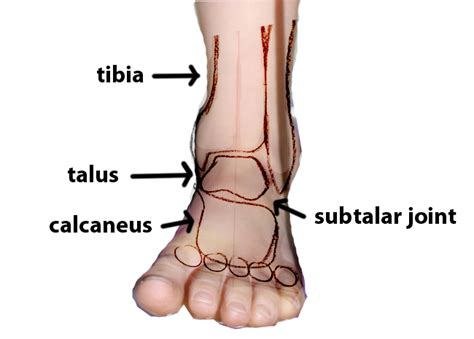subtalar joint picture 7