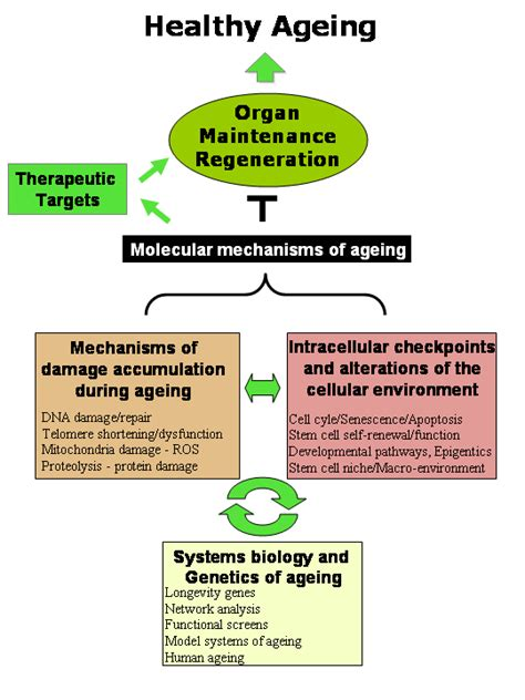 ageing research picture 14