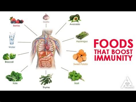 What herbal supplement help boost the immune system picture 15