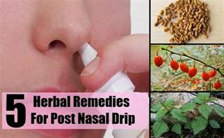 best herb for post nasal drip picture 2