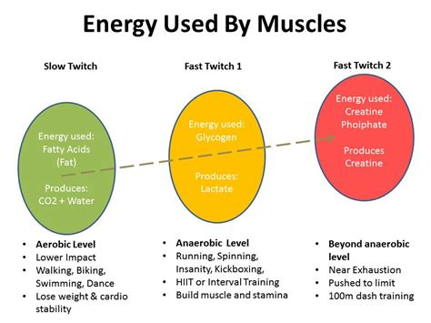 what muscle fibers burn fat picture 1