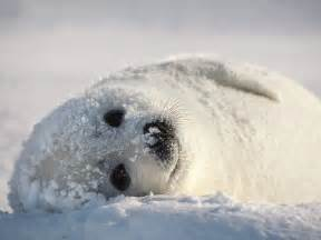, seal pack hd bp picture 3