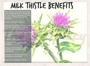 milk thistle benefits picture 1