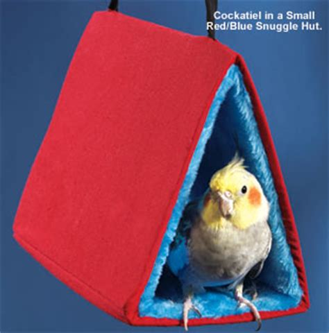 dangers of happy huts - sleeping tents - parrots picture 1